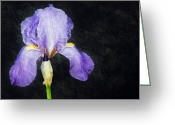 Stamen Greeting Cards - The Lone Iris Greeting Card by Andee Photography