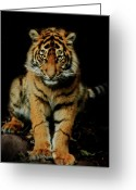 Tiger Tapestries Textiles Greeting Cards - The Look Greeting Card by Animus Photography