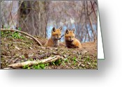 Vulpes Greeting Cards - The Look Greeting Card by Thomas Young