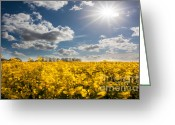 Flovers Greeting Cards - The Magic Of The Summer Greeting Card by Radoslav Toth