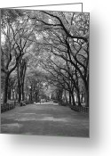 Central Park Photo Greeting Cards - The Mall and the Poets Greeting Card by Christopher Kirby