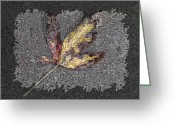 Dark Grey Greeting Cards - The Maple 4 Greeting Card by Tim Allen