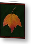 Lacy Abstract Greeting Cards - The Maple Greeting Card by Anne Lacy
