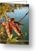 In Focus Greeting Cards - The maple story Greeting Card by Graphics Metropolis