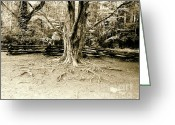 Split-rail Fence Greeting Cards - The Matriarch Greeting Card by Scott Pellegrin