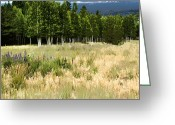 Hdr Look Photo Greeting Cards - The Meadow Digital Art Greeting Card by Phyllis Denton