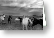 Open Range Greeting Cards - The Meeting Greeting Card by Robert Lacy