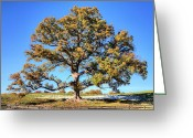 Longevity Greeting Cards - The Mighty Greeting Card by JC Findley