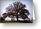 "\\\\\\\""boone County Photo Greeting Cards - The Mighty Oak in Fall Greeting Card by Cricket Hackmann"