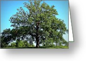 "\\\\\\\""boone County Photo Greeting Cards - The Mighty Oak in Summer Greeting Card by Cricket Hackmann"