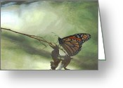 Monarchs Greeting Cards - The Monarch Greeting Card by Ernie Echols