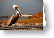 Most Greeting Cards - The most beautiful Pelican Greeting Card by Susanne Van Hulst