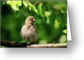 Passerines Greeting Cards - The Musician Takes A Break Greeting Card by Lois Bryan