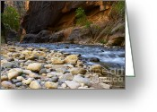 Sacred Earth Greeting Cards - The Narrows Struggle To Survive Greeting Card by Bob Christopher