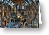 D700 Greeting Cards - The Natural History Museum London UK Greeting Card by Donald Davis