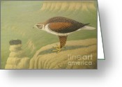 Falcon Drawings Greeting Cards - The Nest Greeting Card by Alan Suliber