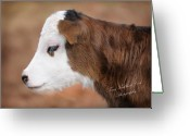 Newborn Greeting Cards - The New Calf Greeting Card by Terry Kirkland Cook