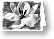 Outdoor Still Life Greeting Cards - The Notecard Greeting Card by Karen M Scovill