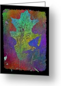 Arbor Greeting Cards - The Oak Leaf Greeting Card by Tim Allen