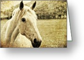 Domestic Animal Photo Greeting Cards - The Old Grey Mare Greeting Card by Meirion Matthias