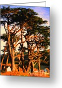 Foilage Greeting Cards - The Old Grove At The Ranch At Sunset . 40D4531 . Painterly Greeting Card by Wingsdomain Art and Photography