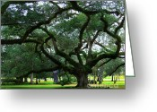 Live Oak Trees Greeting Cards - The Old Oak Greeting Card by Perry Webster