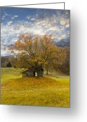 Old Cabins Photo Greeting Cards - The Old Oak Tree Greeting Card by Debra and Dave Vanderlaan