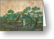 Post-impressionist Greeting Cards - The Olive Pickers Greeting Card by Vincent van Gogh