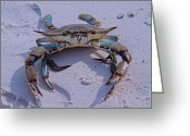 Blue Crab Greeting Cards - The One that Got Away Greeting Card by East Coast Barrier Islands Betsy A Cutler