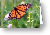 Wild-life Greeting Cards - The orange butterfly Greeting Card by Robert Pearson
