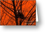Silhouettes Greeting Cards - The Owl . Orange Greeting Card by Wingsdomain Art and Photography