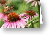Echinacea Greeting Cards - The Painted Ladies Greeting Card by Ernie Echols