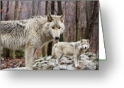 Watchful Eye Greeting Cards - The Pairing Greeting Card by Jim DeLillo
