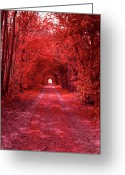 Tree Allee Greeting Cards - The Path 2 Greeting Card by Stefan Kuhn