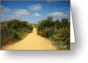 Chic Greeting Cards - The Path Is The Way Greeting Card by Oliver Johnston