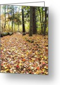Creative Passages Photo Greeting Cards - The path of leaves Greeting Card by Cassandra Donnelly