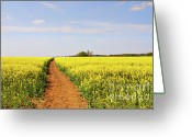 Rapeseed Greeting Cards - The Path to Bosworth Field Greeting Card by John Edwards