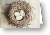 Chic Greeting Cards - The Perfect Nest Greeting Card by Lisa Russo