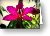 Flowers Of Nature Greeting Cards - The Pink Lady Greeting Card by Karen Wiles