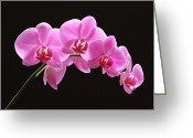 Flower Over Black Photo Greeting Cards - The Pink Orchid Greeting Card by Juergen Roth