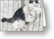 Lapdog Greeting Cards - The playful kitten Greeting Card by Odon Czintos