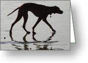 Dog Prints Photo Greeting Cards - The Pointer Greeting Card by Barry Goble