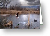 Mallards Greeting Cards - The Pond Greeting Card by Bill Stephens