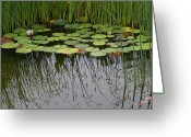 Oregon Greeting Cards - The Pond Greeting Card by Rebecca Cozart