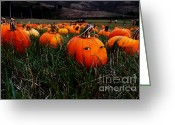 Pumpkin Farm Greeting Cards - The Pumpkin Patch . When Nobody Is Looking Greeting Card by Wingsdomain Art and Photography