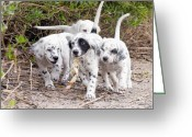 Low Country Greeting Cards - The Puppys Prize Greeting Card by Scott Hansen