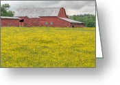 Buttercups Greeting Cards - The Red Barn Greeting Card by JC Findley