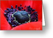 Anemone  Greeting Cards - The red bed Greeting Card by Kristin Kreet