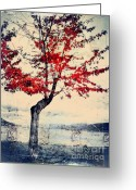 Okanagan Greeting Cards - The Red Tree at Okanagan Lake Greeting Card by Tara Turner