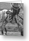 Dressage Photo Greeting Cards - The Rein Back Greeting Card by East Coast Barrier Islands Betsy A Cutler